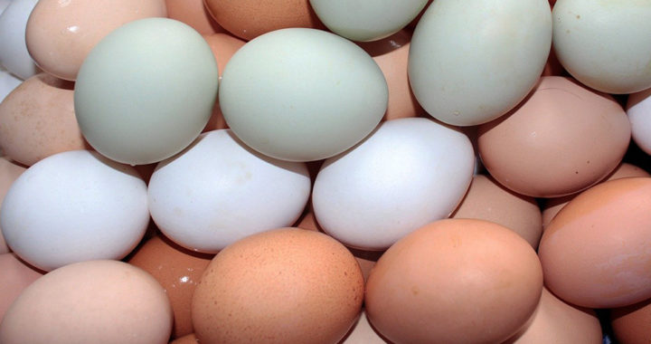 White Eggs vs. Brown Eggs: What is the Difference